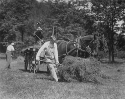 CC pitching hay