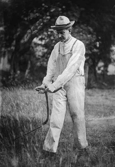 Coolidge working a scythe on one of his fields in Plymouth.