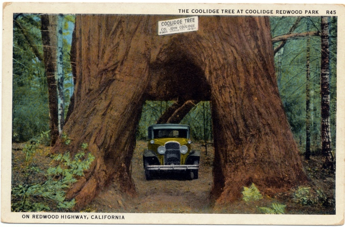 The Coolidge Tree, California