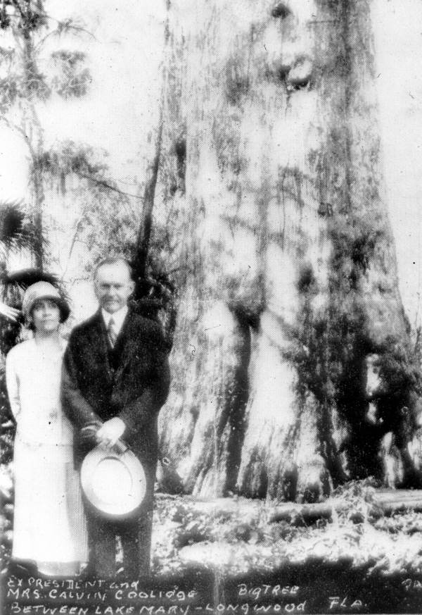 "As documented by James C. Clark in his research on Presidents in Florida, this picture widely circulated soon after President Coolidge's visit to the Longwood area in 1929 was a case of doctored photography. The superimposed image of the Coolidges beside the 3500 year old ""Senator"" was circulated anew after it caught fire and collapsed in 2012."