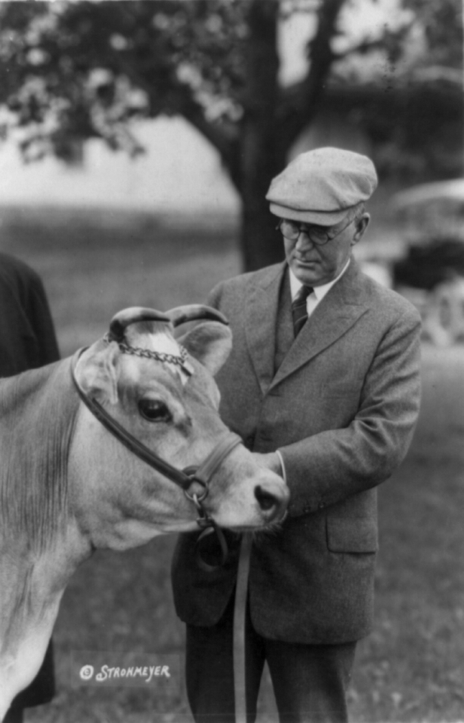 Secretary of Agriculture under Presidents Harding and Coolidge until his sudden death in 1924, Henry C. Wallace is pictured here tending to one of his Jersey cows.