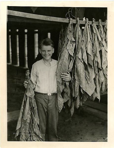 Cal Jr. at work on local tobacco fields, summer of 1923