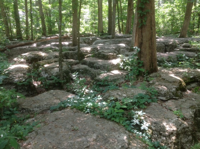 17. Stones River National Military Park (now Battlefield), established as such by Coolidge on March 3, 1927. Those who fought here called it the Slaughter Pen. This glimpse of the terrain helps explain why.
