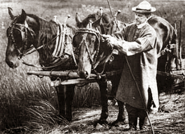 coolidge-and-dray-horses