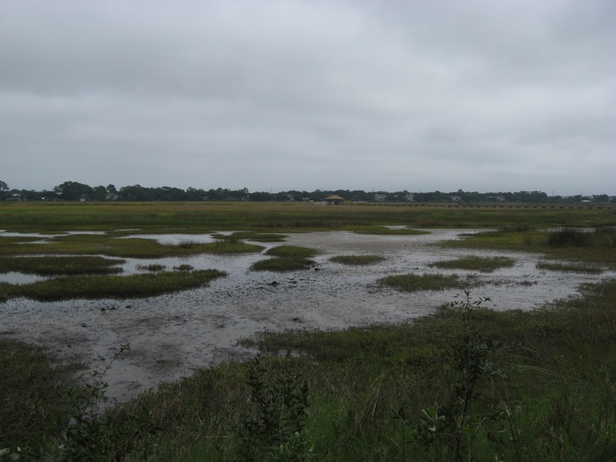 The salt marshes where Bloody Marsh was fought, as they look today.