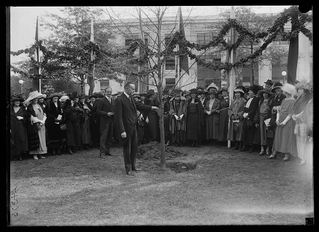 Calvin Coolidge planting commemorative tree, 1922. Courtesy of the Library of Congress.