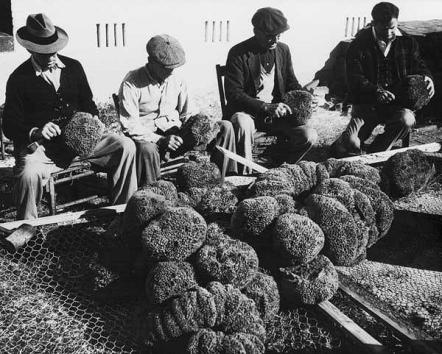 Sponge Industry-1921
