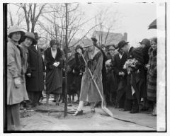 Grace Coolidge plants a tree at the Chevy Chase Playground, February 28, 1929