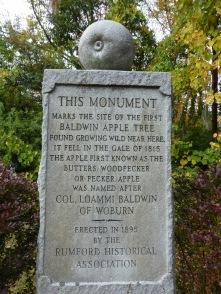 Monument to the now rare but once immensely popular Baldwin apple developed by Colonel Loammi Baldwin.